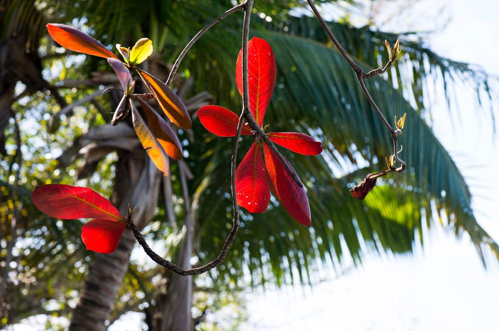 tropical foliage on Abaco Island