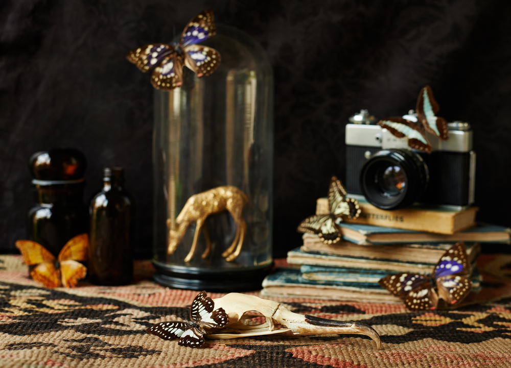 gothic inspired still life interiors image