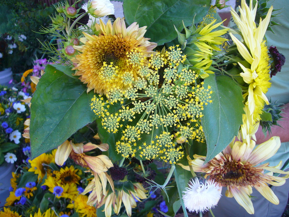 Fennel & Sunflowers