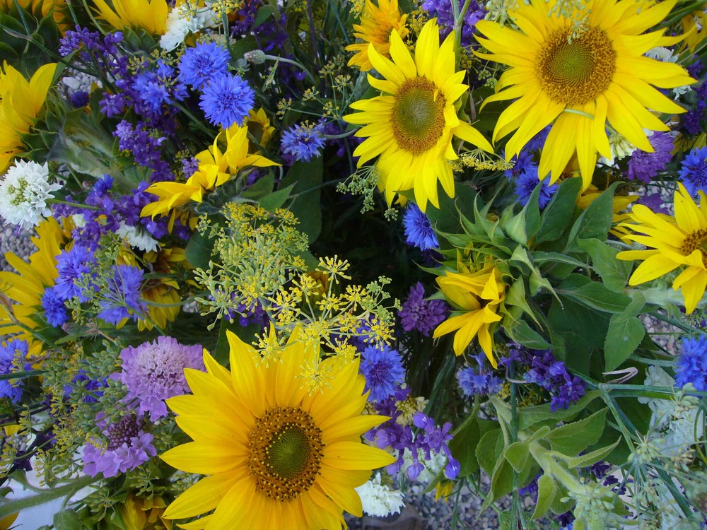 Sunflowers, Salvia, Bachelor Buttons, Fennel, Scabiosa