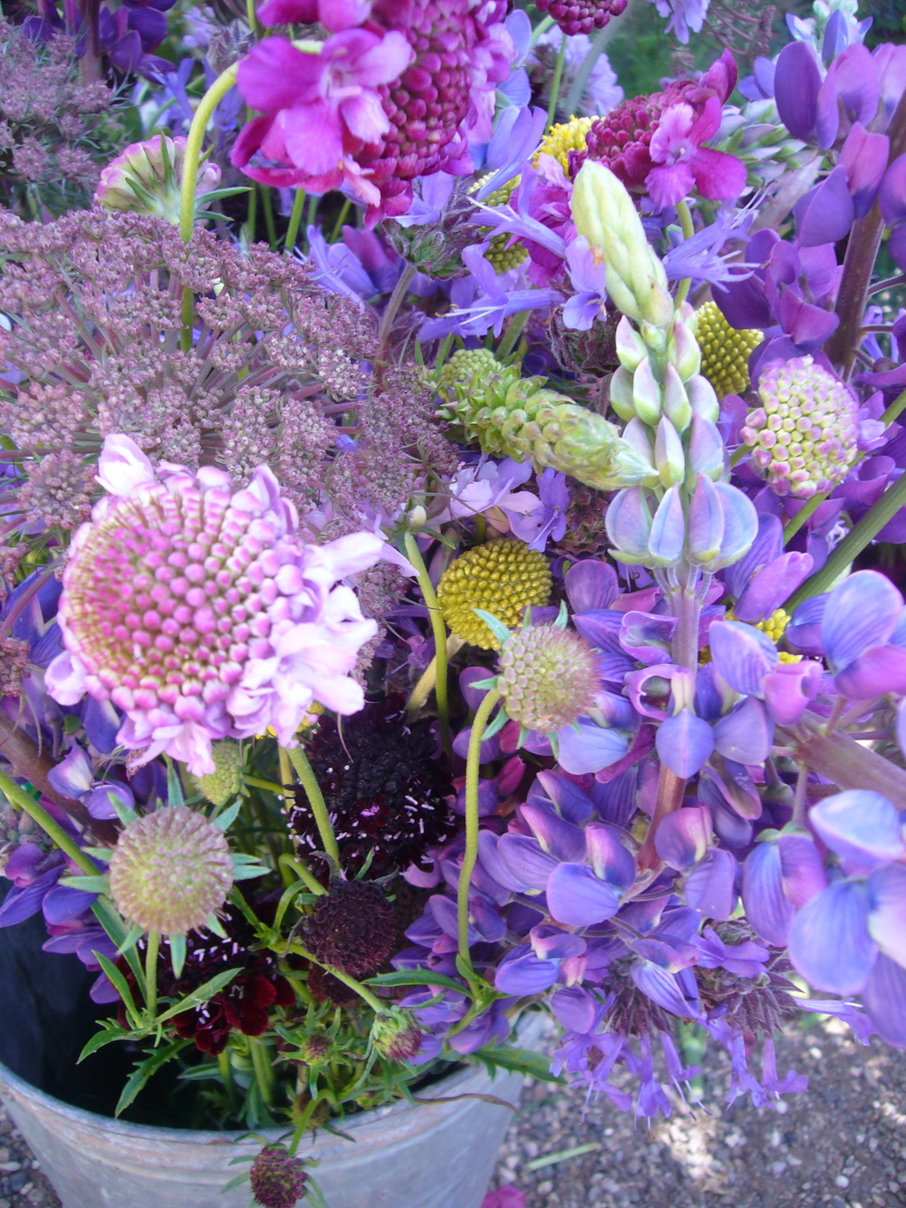 Lupin, Scabiosa, Black Dill, Billy Buttons