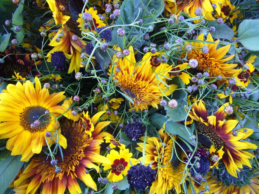 Coreopsis, Scabiosa, Sunflower