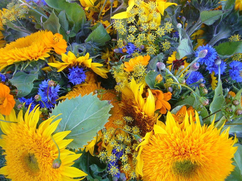 Bachelor Buttons, Sunflower, Bright Lights, Cosmos, Fennel, Coreopsis