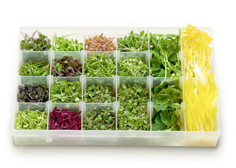 Microgreens and other herbs are amazing, refreshing additions to drinks and meals.