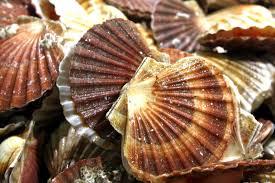 shellfishshack4.jpg