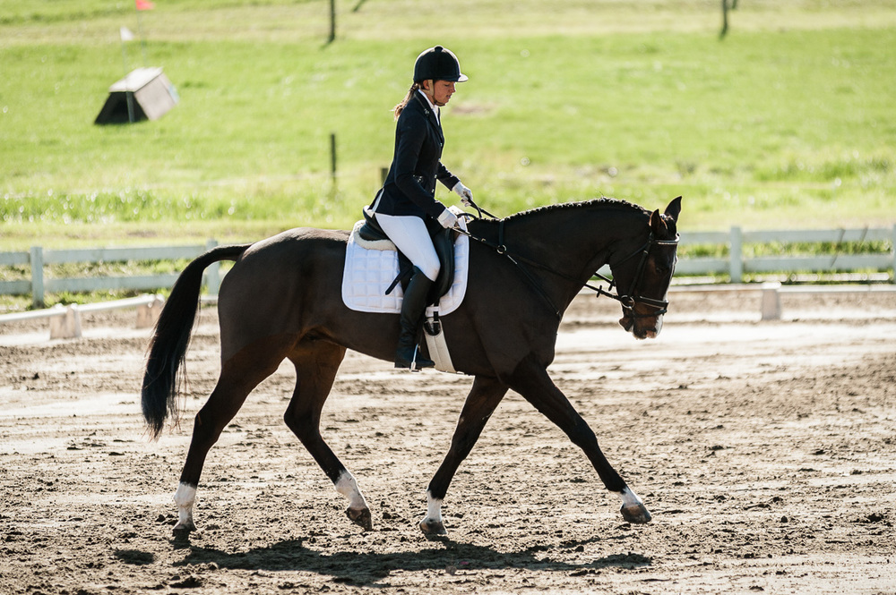 Next time: A post on the 1000 things that have to be correct for a 'good' dressage picture.
