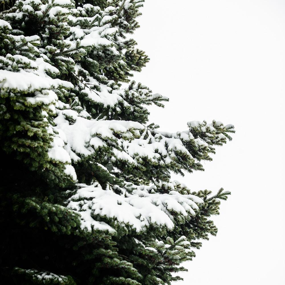 Mossburn Trees