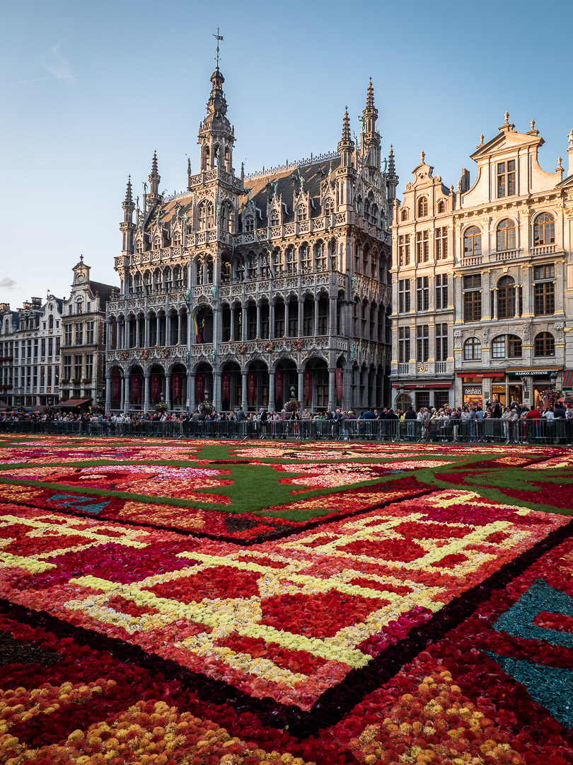 Flower Carpet and the Maison du Roi