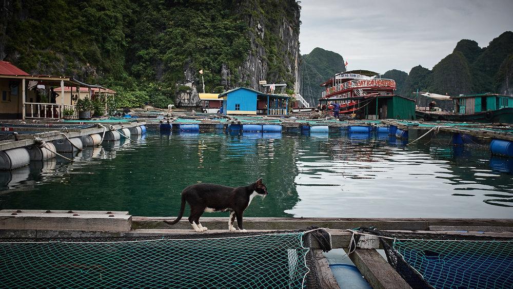 170620-Vietnam-Cat_Ba-0083.jpg
