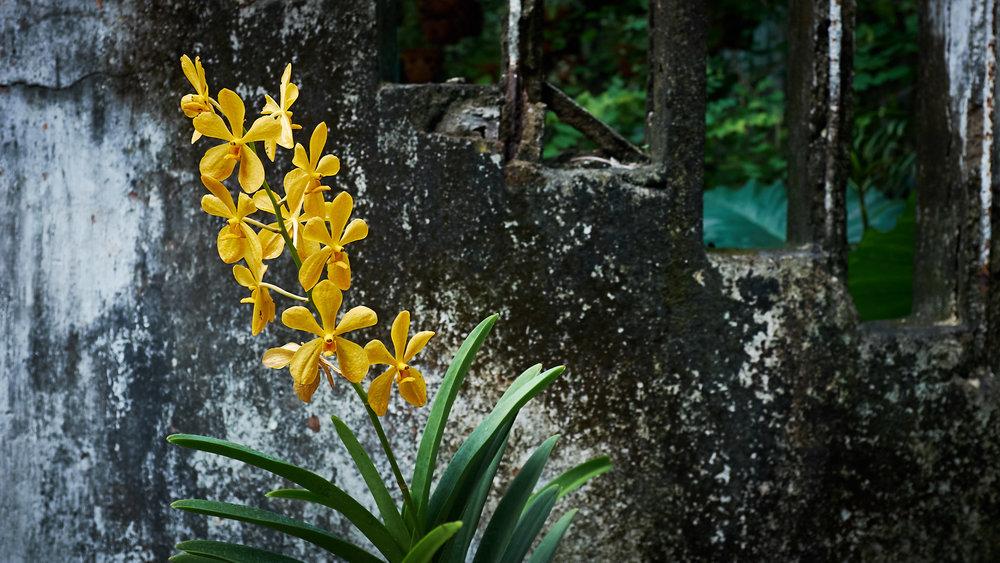 170601-Vietnam-Saigon-0202.jpg