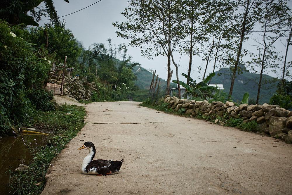 170624-Vietnam-Sapa-0311.jpg
