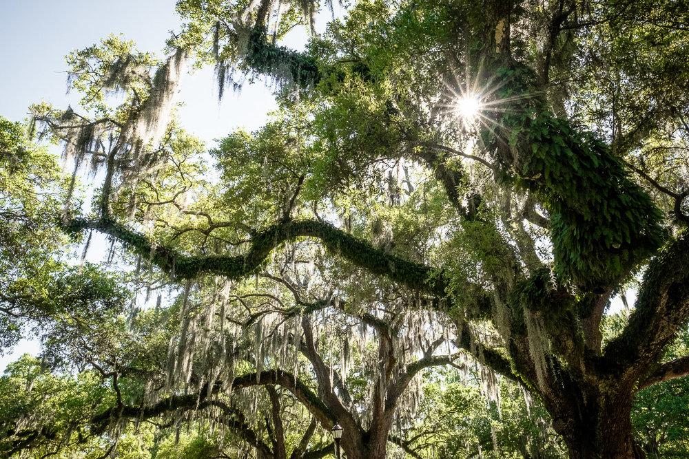 170401-New_Orleans-75-1080.jpg