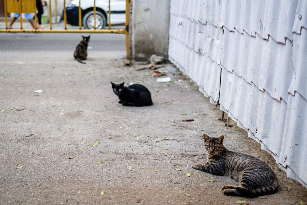 180430-Havana-208-1080.jpg