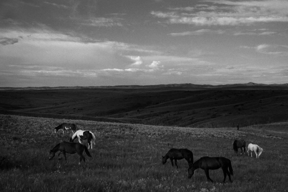 horsesBW.jpg