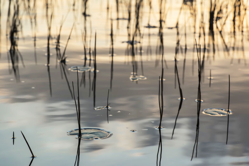 Pond 6, 2012