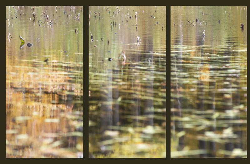 Pond 18 Triptych, 2013
