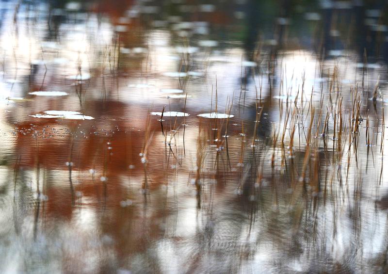 Pond 7, 2012