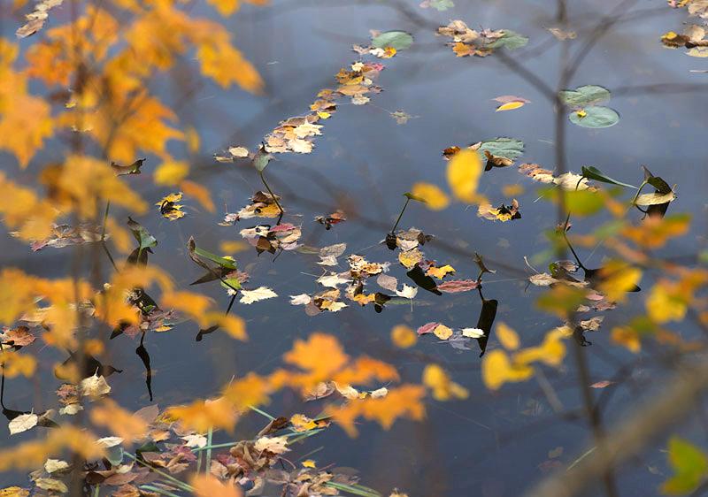 Pond 3, 2013