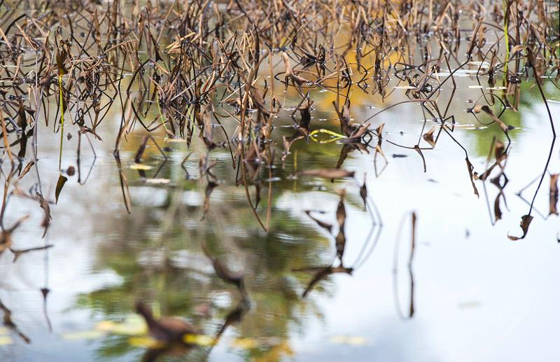 Pond 9, 2012