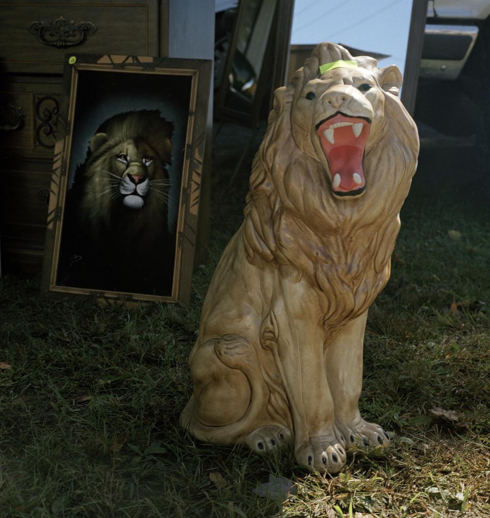 lion lion.jpg