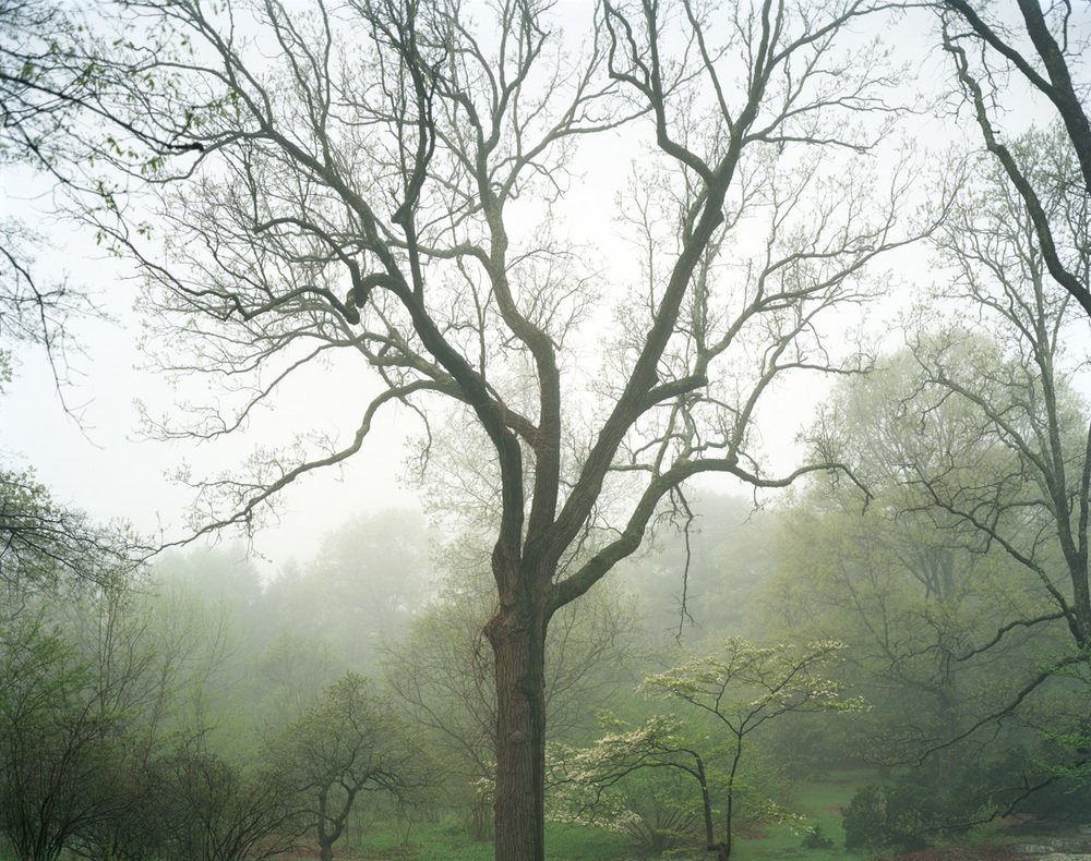 Arnold Arboretum: Boston MA, 2013