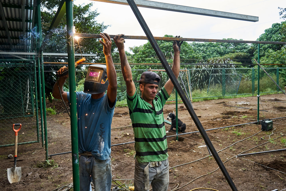 workers building new enclosures to house pregnant and sick dogs away from the main cages.