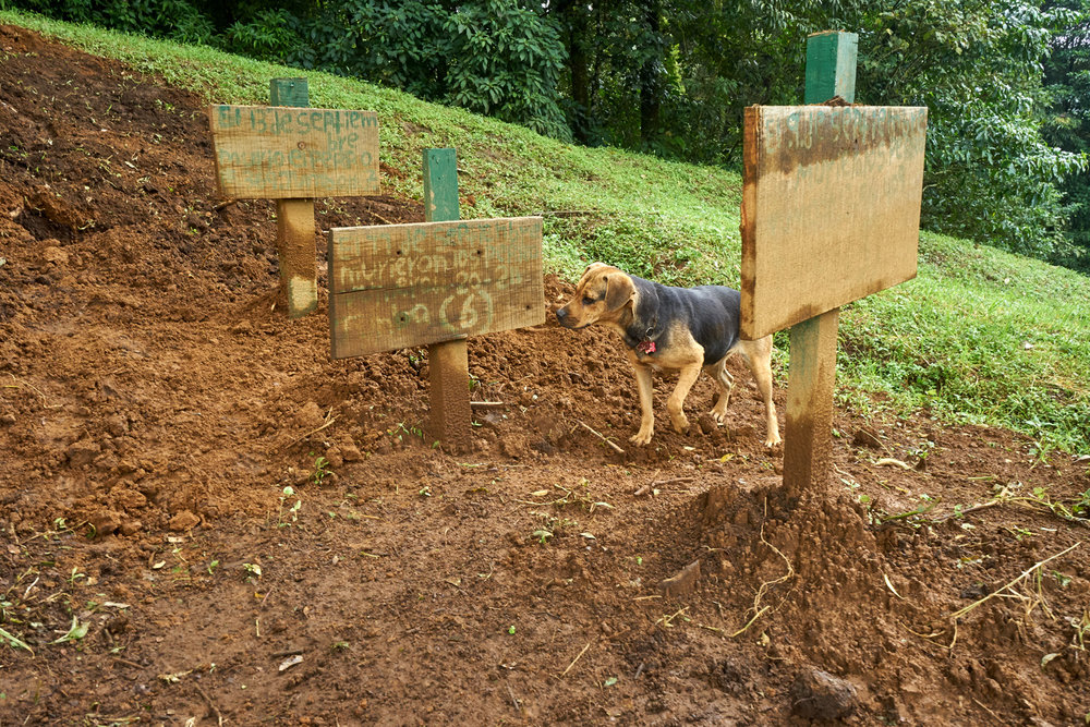 fresh graves for dogs that died recently after drinking contaminated water. The shelter goes to great lengths to keep the water supply contaminant free. They suspect that the supply in one of the troughs may have been poisoned by an imposter.