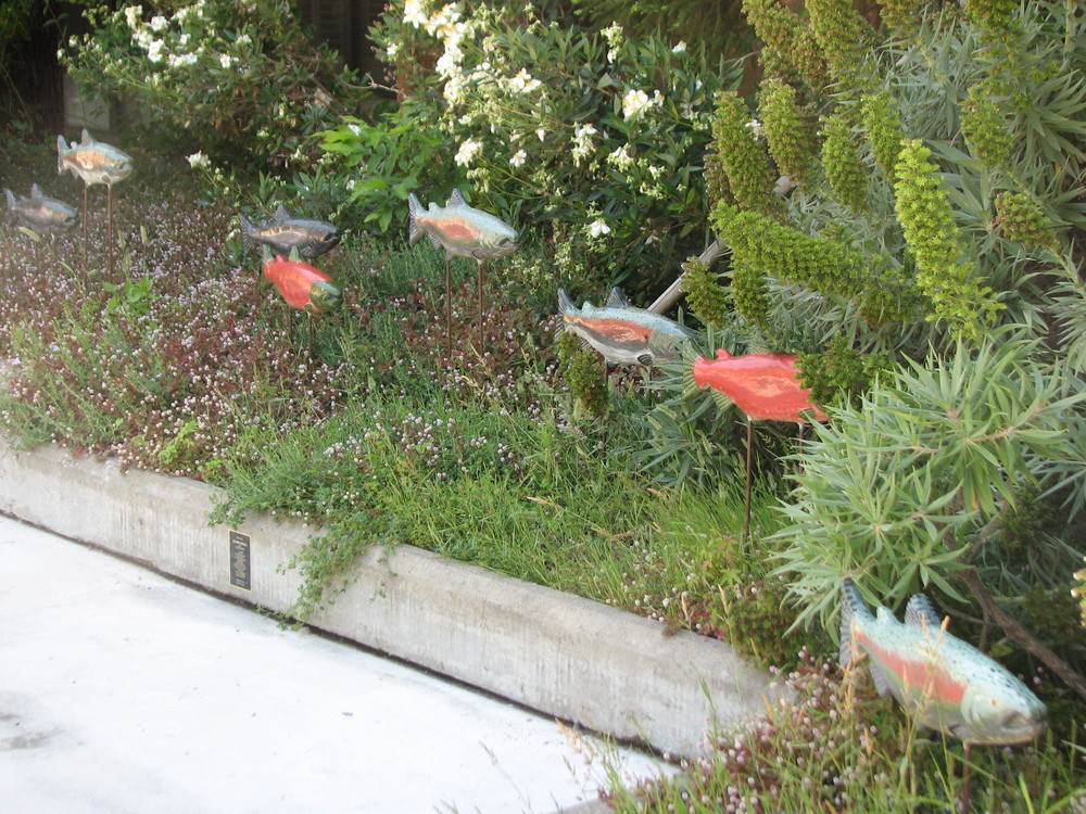 """Ceramic Salmon"" 9""x24""x3"" Ceramic on steel rods 2012 Located at Riverside Apts. P st Sacramento, CA"