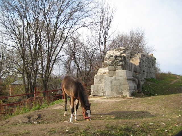 foal-grazing-near-the-old-kremlin-walls-in-serpukhov