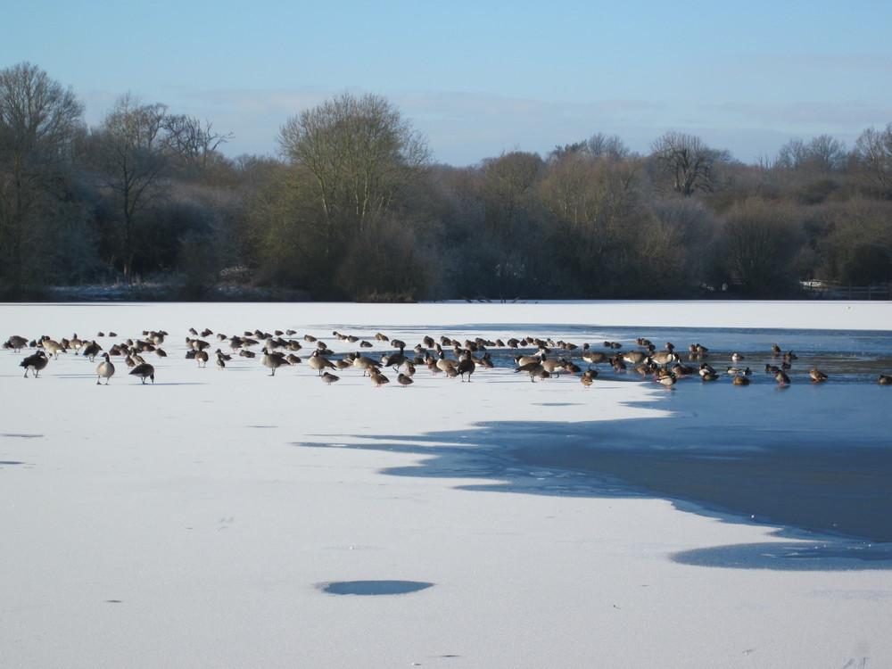 hatfield-frost-052.jpg