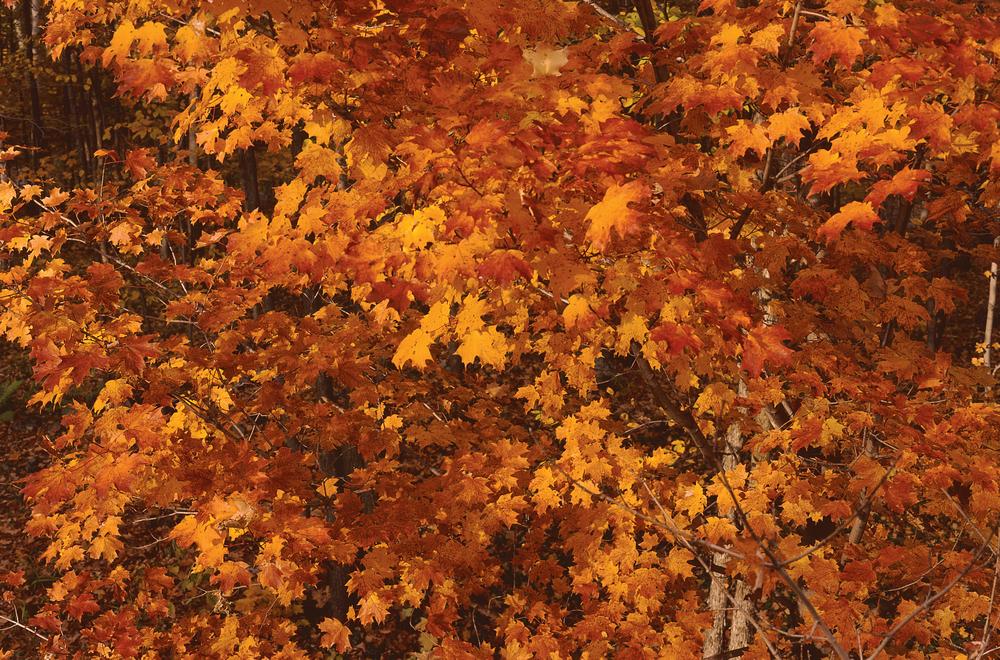 autumnleaves_highres.jpg