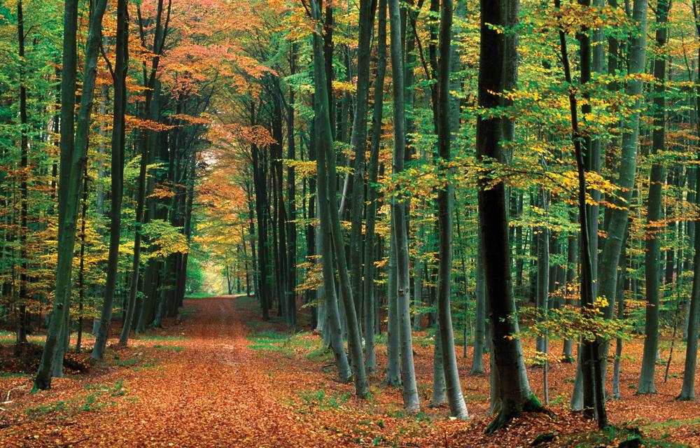 autumnforest2_highres.jpg