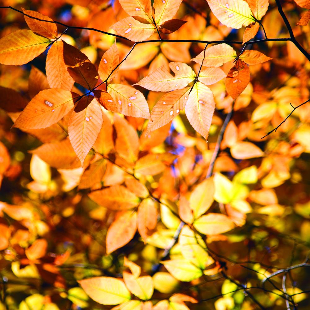 autumnleaves4_highres.jpg
