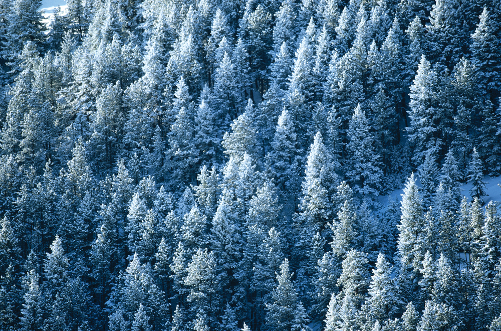 snowtrees_highres.jpg