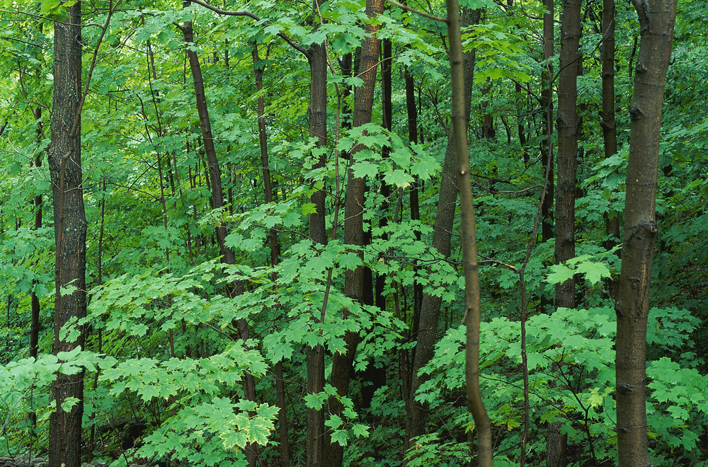 trees_highres.jpg