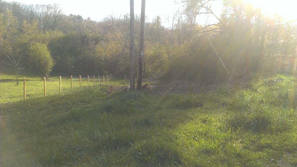 From a barren pasture...a fertile farm will grow.