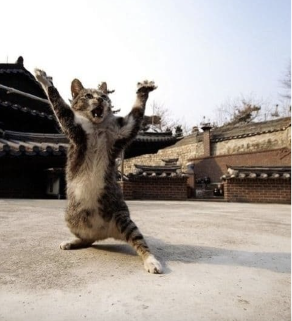 Is this Karate Cat? - (original photo)