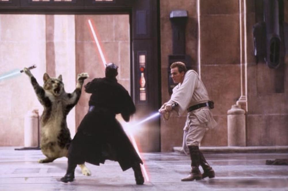 or... Jedi Cat! -