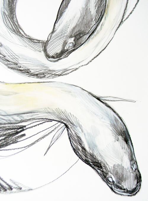 eels.jpg