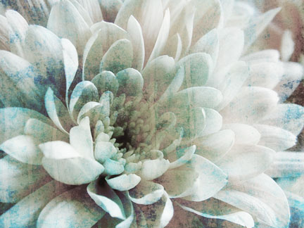 Abstract Chrysanthemum I.jpg