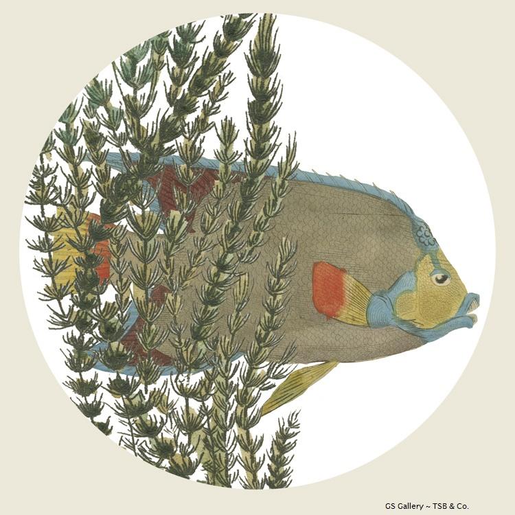 G306 Fish & Seaweed.jpg