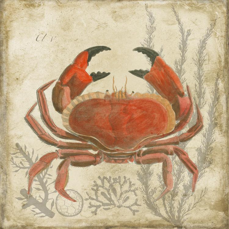 G11521 Crab.jpg