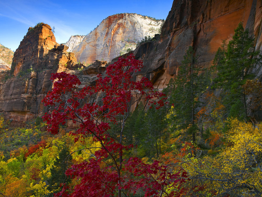 AUTUMN IN THE CANYON .jpg