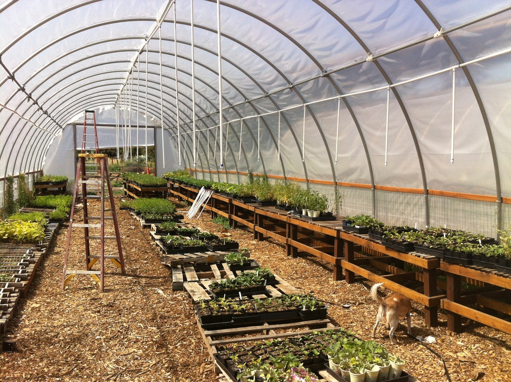 We're currently installing a new sprinkler system in our greenhouses thanks to a grant from Patagonia.