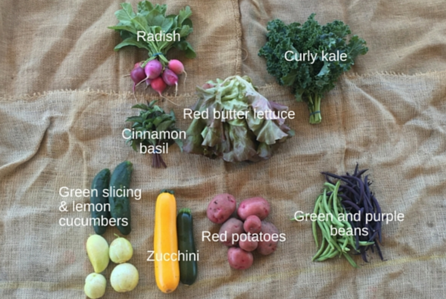 June: Apricots, beets, cucumbers, kale, lettuce, beans, potatoes, plums, radish, and zucchini