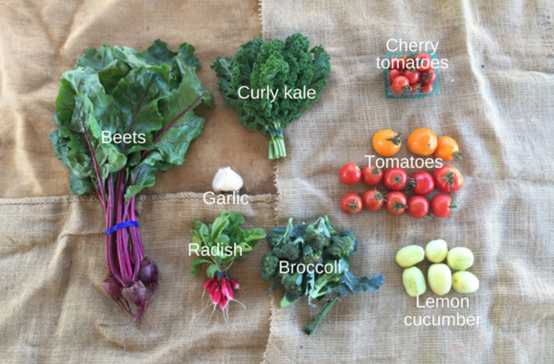 October: Broccoli, cucumber, eggplant, garlic, beets, kale, basil, persimmons, tomatillos, tomatoes, beans