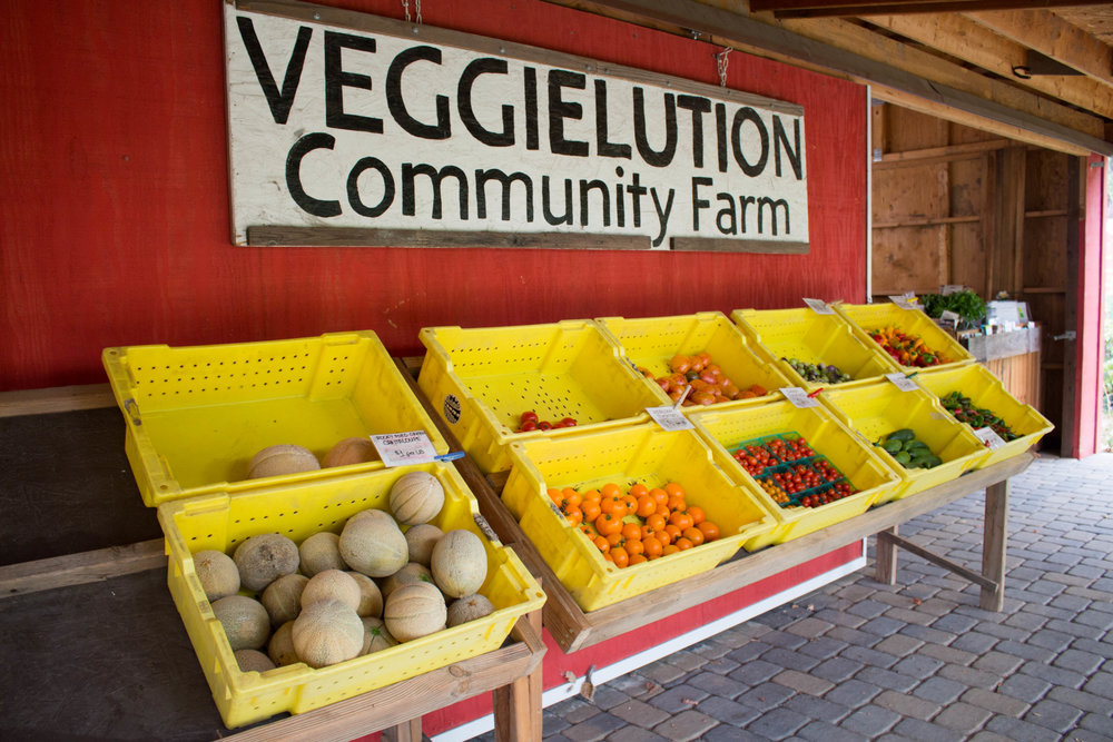 Veggielution Food... - We grow over 30,000 pounds of produce using organic and sustainable growing practices. Over 60% of the produce we grow is distributed to our East San José community residents through low-cost channels, including our farm stand and donations to Veggielution volunteers and program participants.