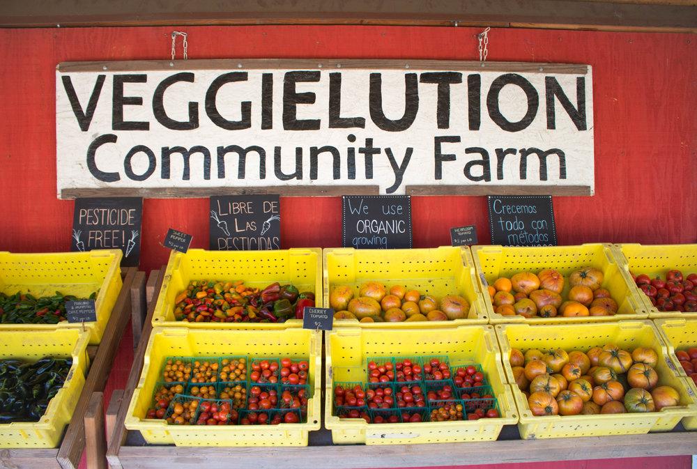 Farm Stand - 10 A.M - 2 P.M