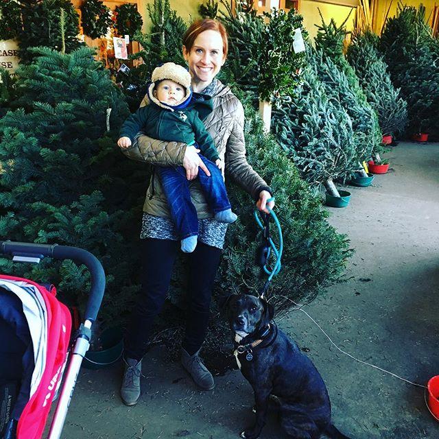 Caleb and Asha are great at Christmas tree shopping 🎄🎄#babycalebbrown #asha_pup