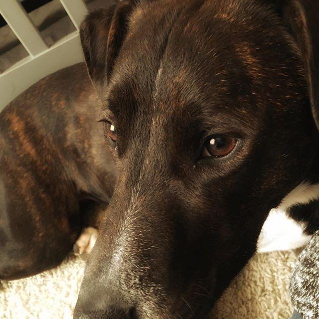 Sweet pup #asha_pup